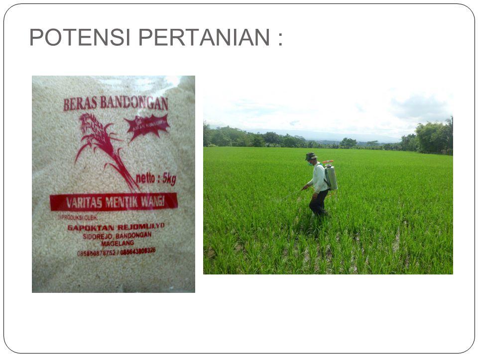  Selain bekerja sebagai petani atau buruh tani, penduduk desa Kebonagung juga memelihara ternak.