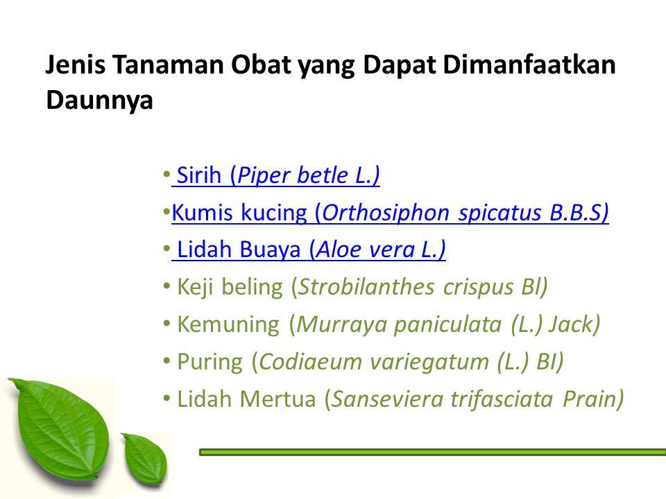 Jenis Tanaman Obat yang Dapat Dimanfaatkan Daunnya Sirih (Piper betle L.) Sirih (Piper betle L.) Kumis kucing (Orthosiphon spicatus B.B.S) Kumis kucin