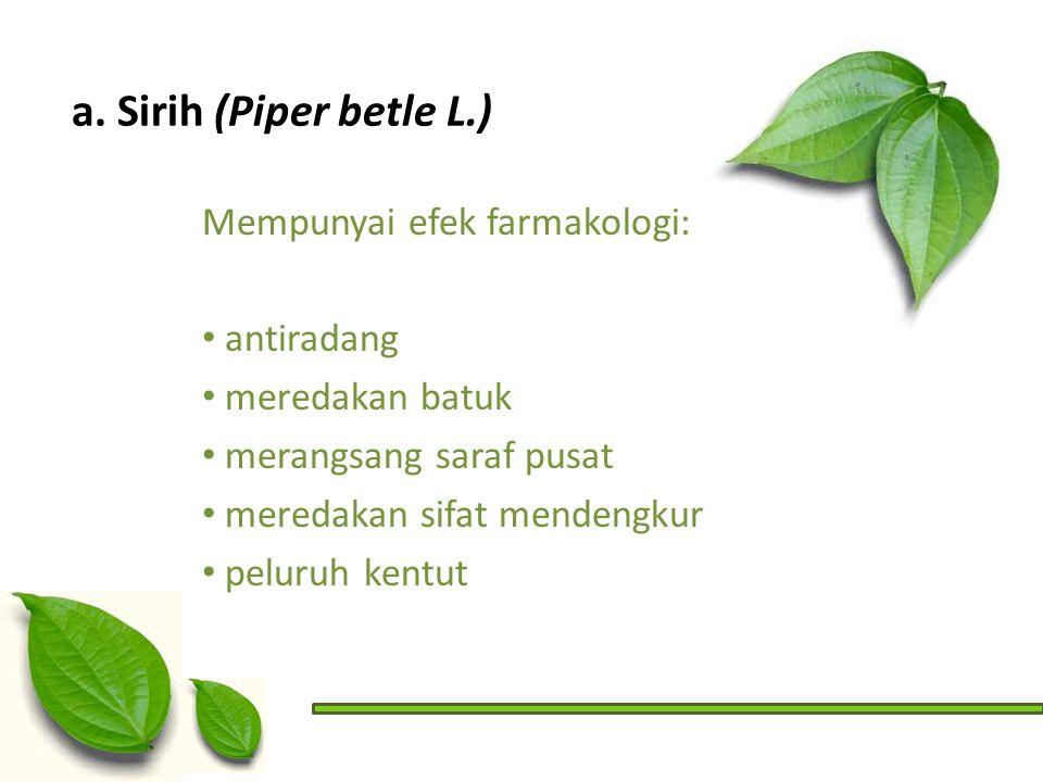 a. Sirih (Piper betle L.) Mempunyai efek farmakologi: antiradang meredakan batuk merangsang saraf pusat meredakan sifat mendengkur peluruh kentut
