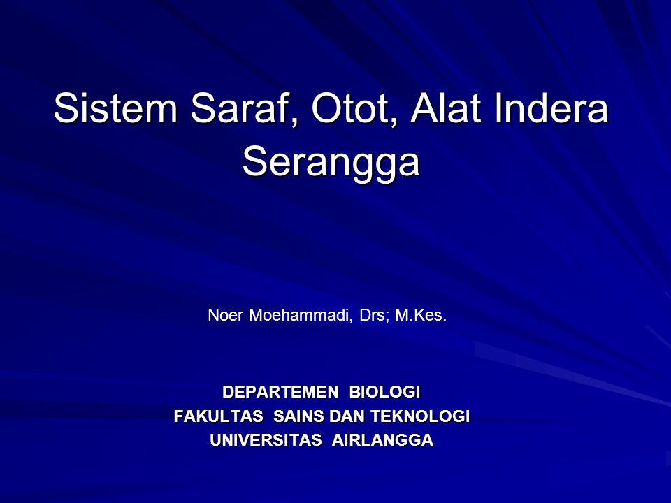 Sistem Saraf, Otot, Alat Indera Serangga DEPARTEMEN BIOLOGI FAKULTAS SAINS DAN TEKNOLOGI UNIVERSITAS AIRLANGGA Noer Moehammadi, Drs; M.Kes.