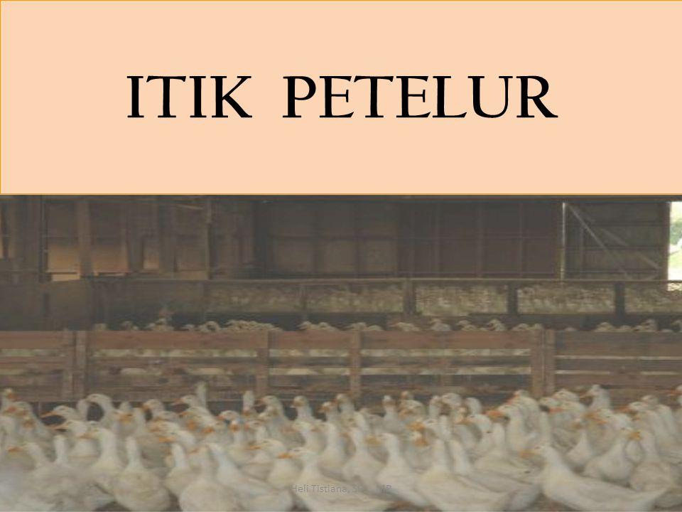 ITIK PETELUR 5Heli Tistiana, SPt., MP