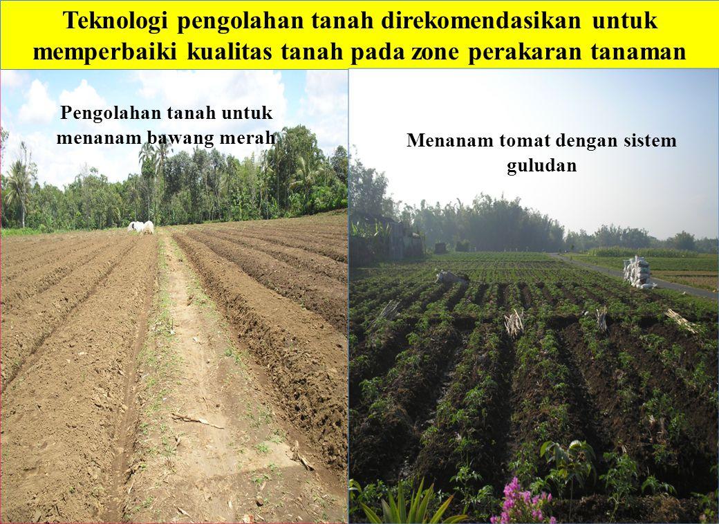 Teknologi pengolahan tanah direkomendasikan untuk memperbaiki kualitas tanah pada zone perakaran tanaman Menanam tomat dengan sistem guludan Pengolaha