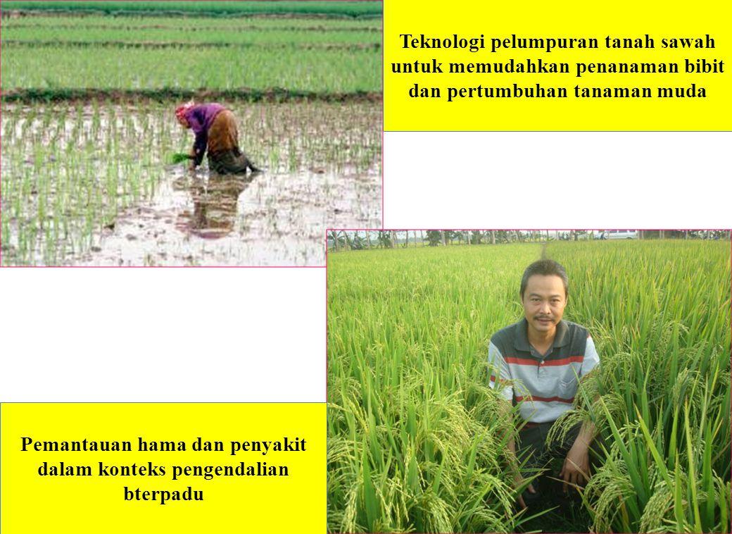 Teknologi pelumpuran tanah sawah untuk memudahkan penanaman bibit dan pertumbuhan tanaman muda Pemantauan hama dan penyakit dalam konteks pengendalian