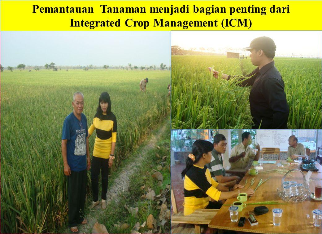 Pemantauan Tanaman menjadi bagian penting dari Integrated Crop Management (ICM)