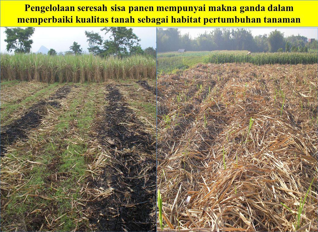 Pengelolaan seresah sisa panen mempunyai makna ganda dalam memperbaiki kualitas tanah sebagai habitat pertumbuhan tanaman