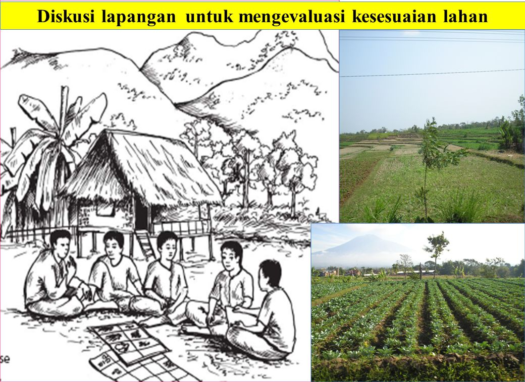 Diskusi lapangan untuk mengevaluasi kesesuaian lahan