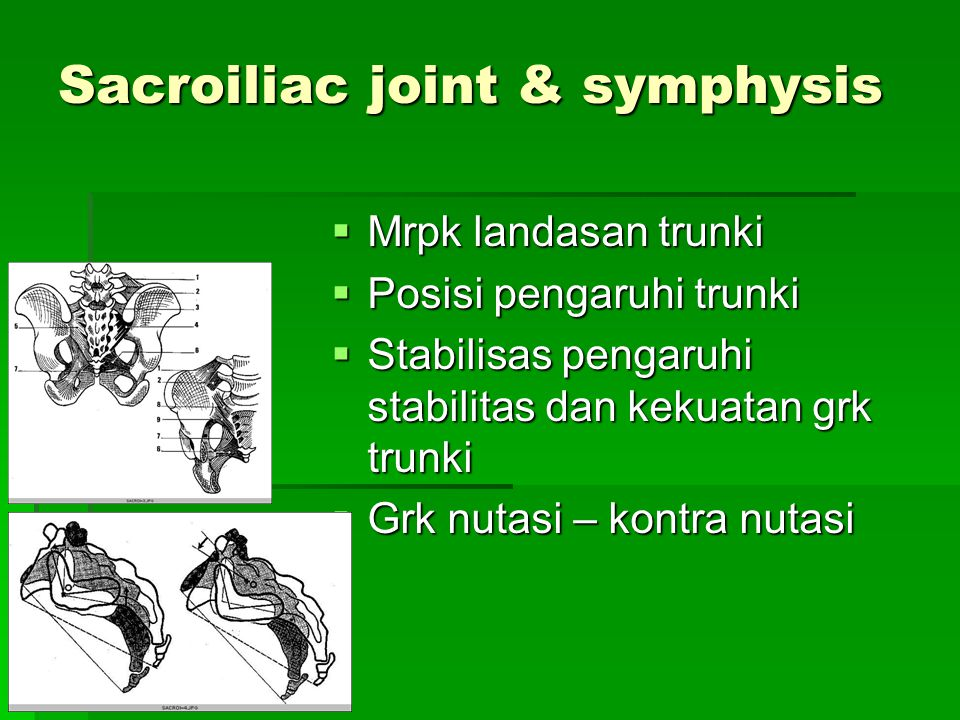 Sacroiliac joint & symphysis  Mrpk landasan trunki  Posisi pengaruhi trunki  Stabilisas pengaruhi stabilitas dan kekuatan grk trunki  Grk nutasi –