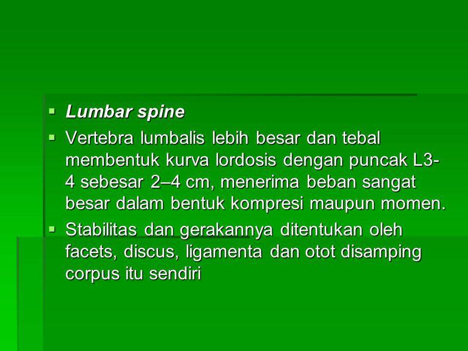  Lumbar spine  Vertebra lumbalis lebih besar dan tebal membentuk kurva lordosis dengan puncak L3- 4 sebesar 2–4 cm, menerima beban sangat besar dala