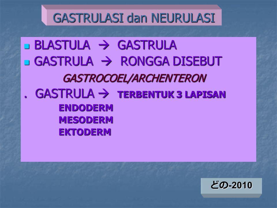 GERAKAN GASTRULASI GASTRULA  PEMBELAHAN SEL GASTRULA  PEMBELAHAN SEL  GERAKAN SEL GERAKAN SEL: GERAKAN SEL: EPIBOLI DAN EMBOLI EPIBOLI DAN EMBOLI - EPIBOLI : GERAK MELINGKUP DI PERMUKAAN LUAR (Gerakan sel-sel ektoderm dari AP ke VP) - EMBOLI : GERAK MENYUSUP KE ARAH DALAM (perpindahan sel-sel yang akan membentuk mesoderm dan endoderm)