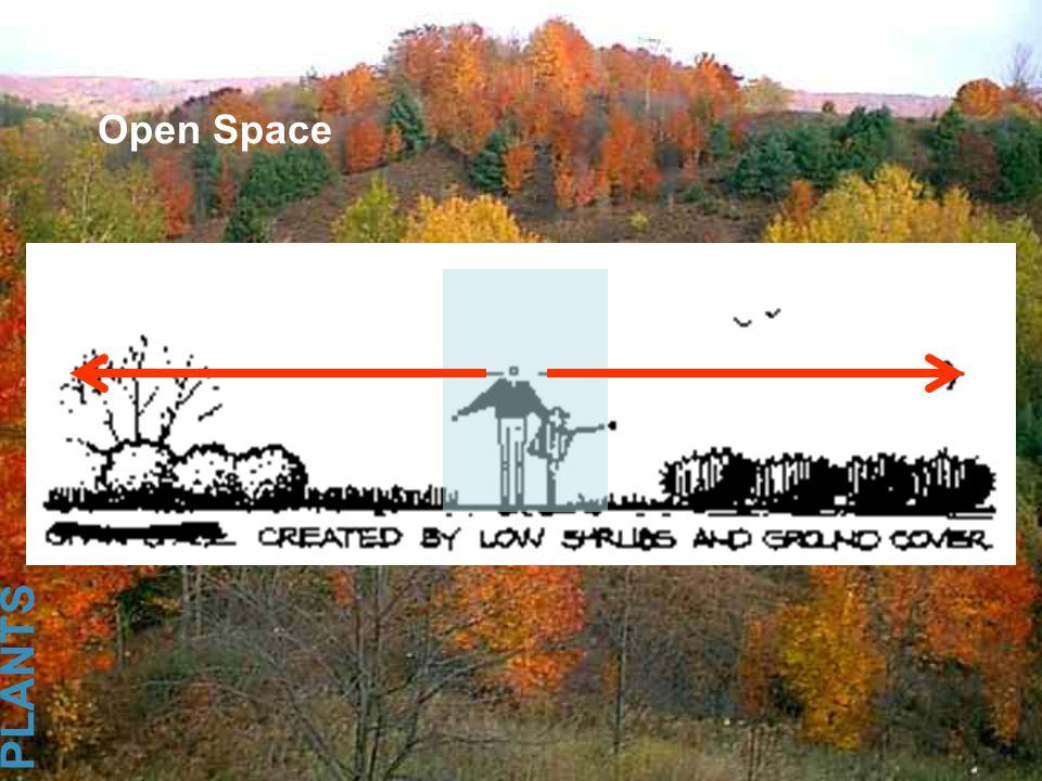 Open Space PLANTS