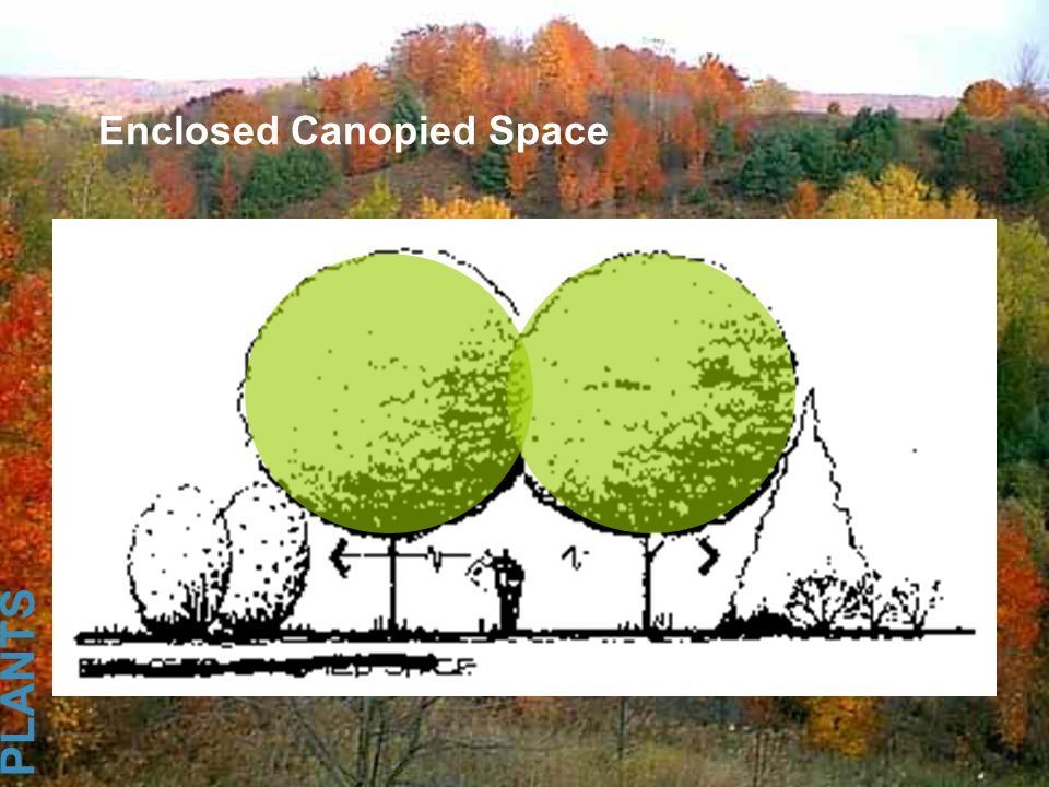Enclosed Canopied Space PLANTS