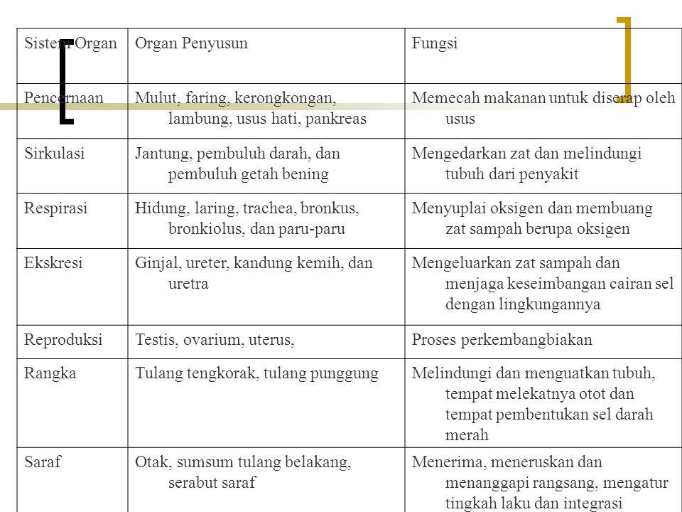 Sistem OrganOrgan PenyusunFungsi PencernaanMulut, faring, kerongkongan, lambung, usus hati, pankreas Memecah makanan untuk diserap oleh usus Sirkulasi
