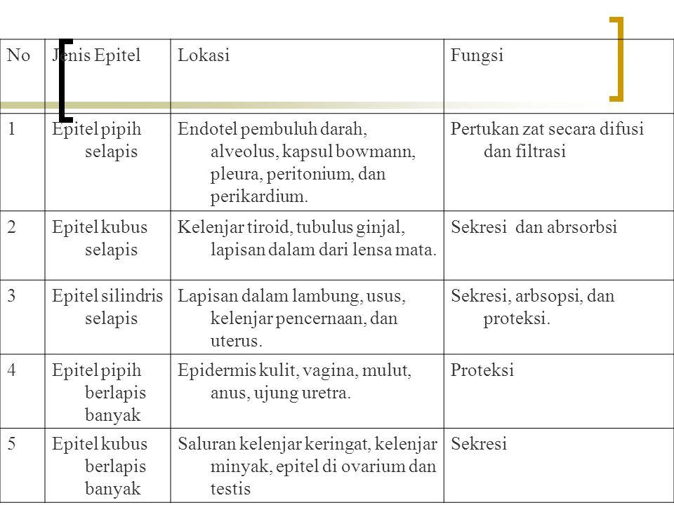 NoJenis EpitelLokasiFungsi 1Epitel pipih selapis Endotel pembuluh darah, alveolus, kapsul bowmann, pleura, peritonium, dan perikardium. Pertukan zat s