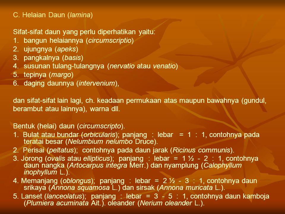 C. Helaian Daun (lamina) Sifat-sifat daun yang perlu diperhatikan yaitu: 1. 1.bangun helaiannya (circumscriptio) 2. 2.ujungnya (apeks) 3. 3.pangkalnya
