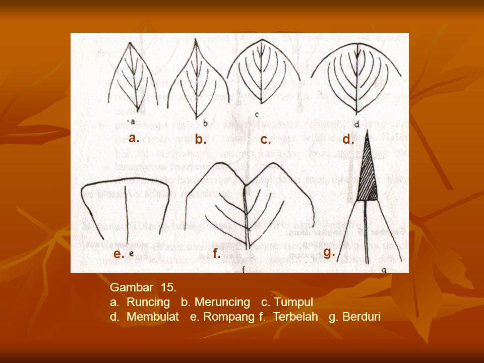 Gambar 15. a. Runcing b. Meruncing c. Tumpul d. Membulat e. Rompang f. Terbelah g. Berduri a. d.c. f.e. g. b.