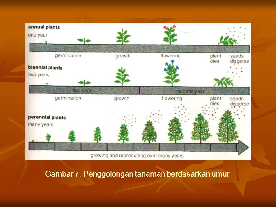 Gambar 7. Penggolongan tanaman berdasarkan umur