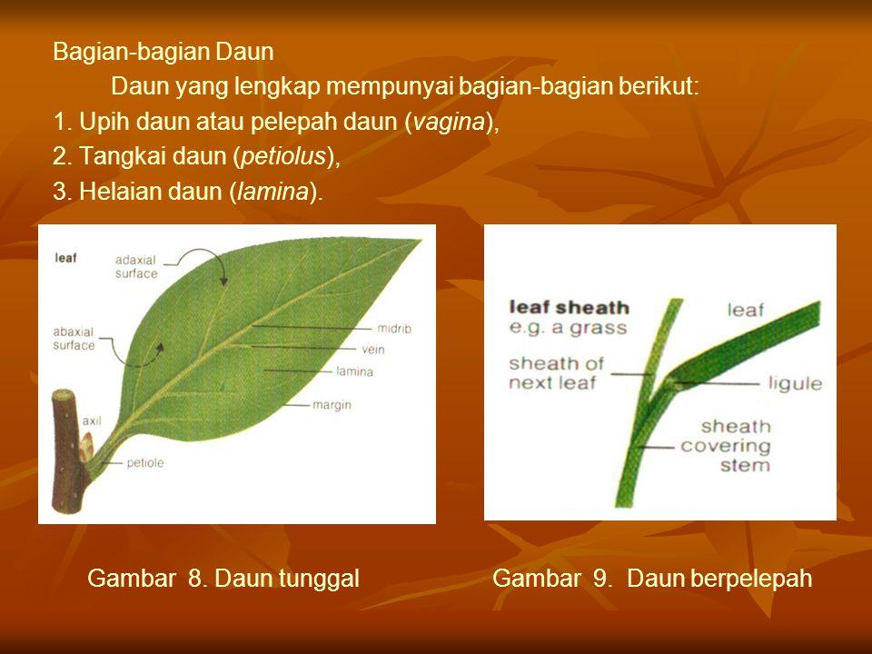Bagian-bagian Daun Daun yang lengkap mempunyai bagian-bagian berikut: 1. Upih daun atau pelepah daun (vagina), 2. Tangkai daun (petiolus), 3. Helaian
