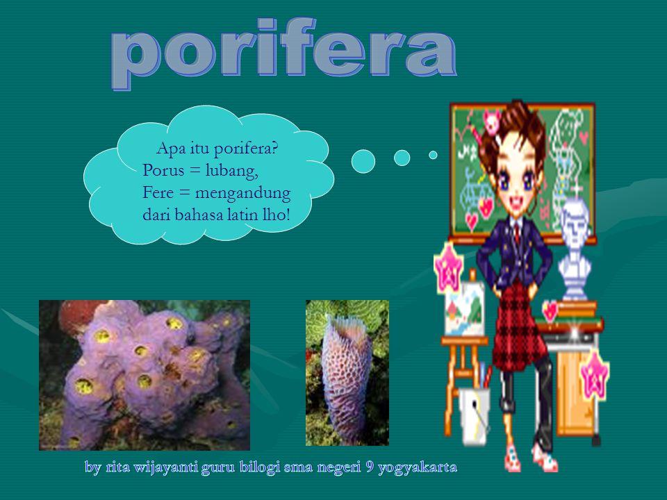 Apa itu porifera? Porus = lubang, Fere = mengandung dari bahasa latin lho!
