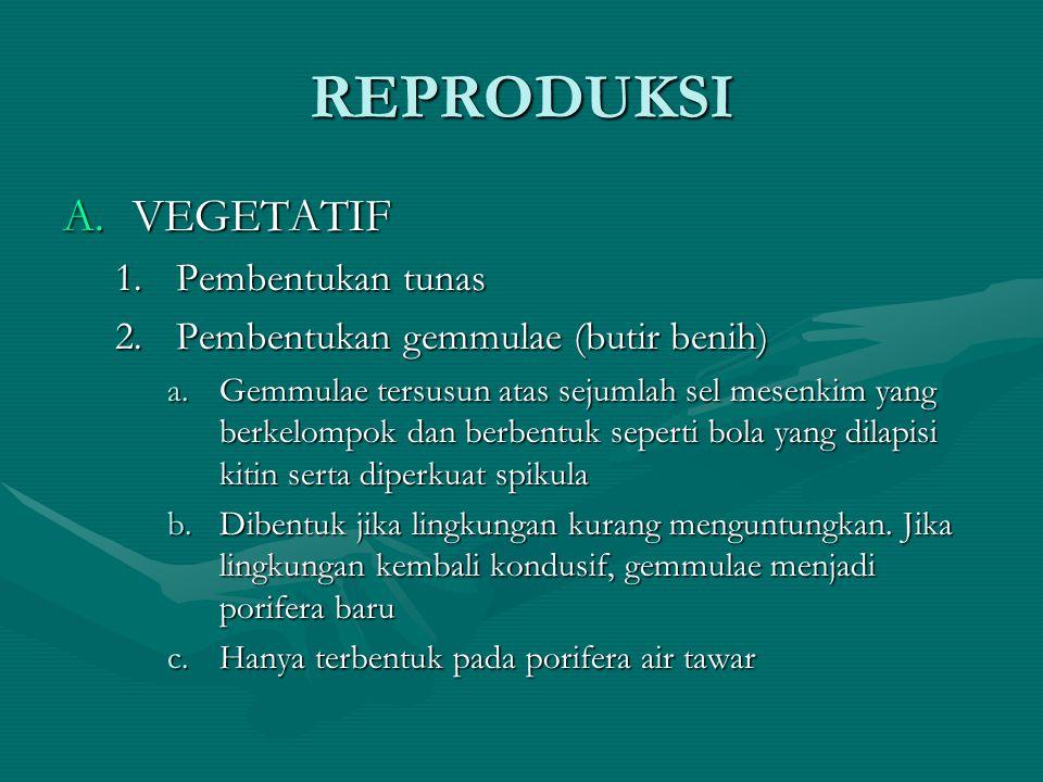REPRODUKSI A.VEGETATIF 1.Pembentukan tunas 2.Pembentukan gemmulae (butir benih) a.Gemmulae tersusun atas sejumlah sel mesenkim yang berkelompok dan be