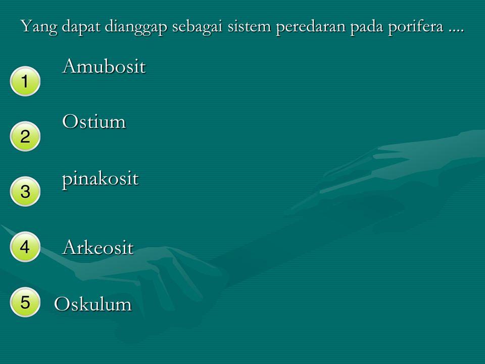 Yang dapat dianggap sebagai sistem peredaran pada porifera.... Amubosit Ostium pinakosit Arkeosit Oskulum