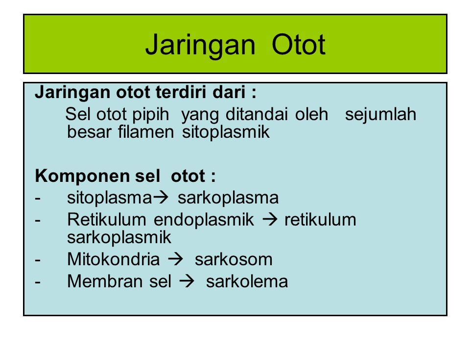 Berdasarkan sifat morfologi dan fungsi jaringan otot dibagi : 1.