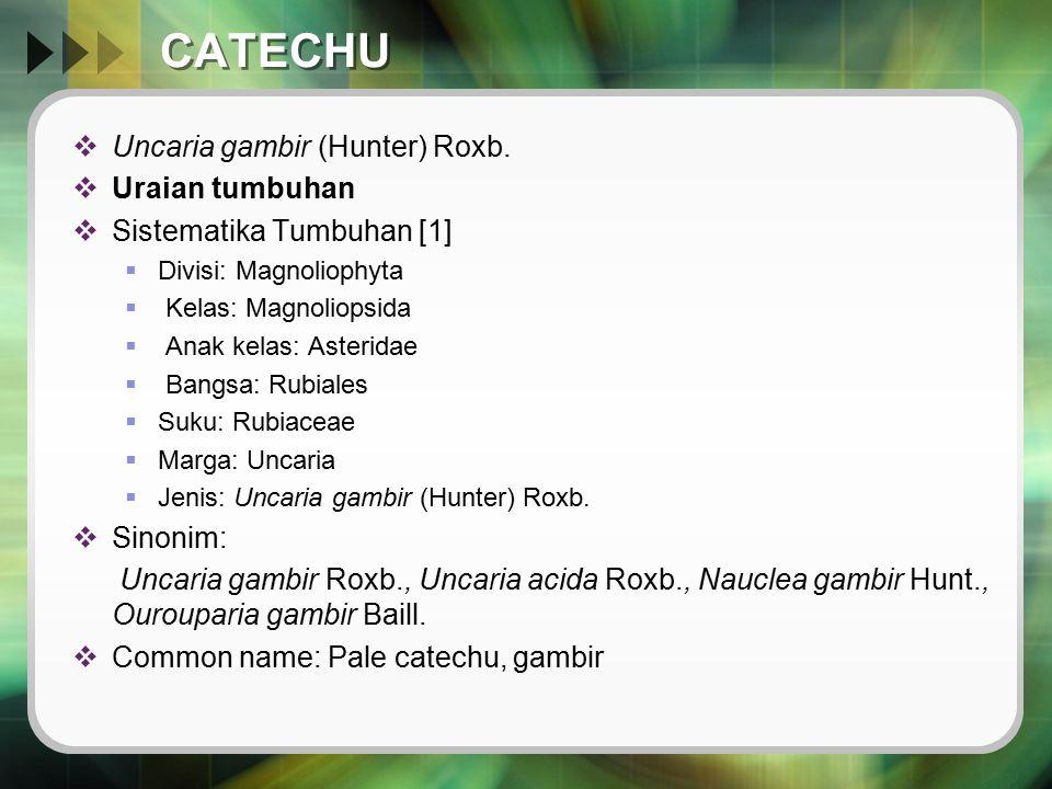 CATECHU  Uncaria gambir (Hunter) Roxb.  Uraian tumbuhan  Sistematika Tumbuhan [1]  Divisi: Magnoliophyta  Kelas: Magnoliopsida  Anak kelas: Aste