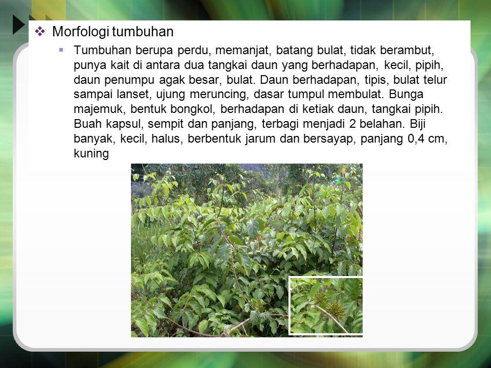  Morfologi tumbuhan  Tumbuhan berupa perdu, memanjat, batang bulat, tidak berambut, punya kait di antara dua tangkai daun yang berhadapan, kecil, pi