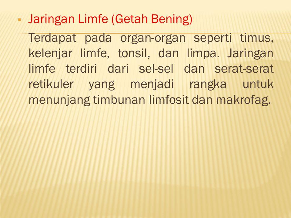  Jaringan Limfe (Getah Bening) Terdapat pada organ-organ seperti timus, kelenjar limfe, tonsil, dan limpa. Jaringan limfe terdiri dari sel-sel dan se