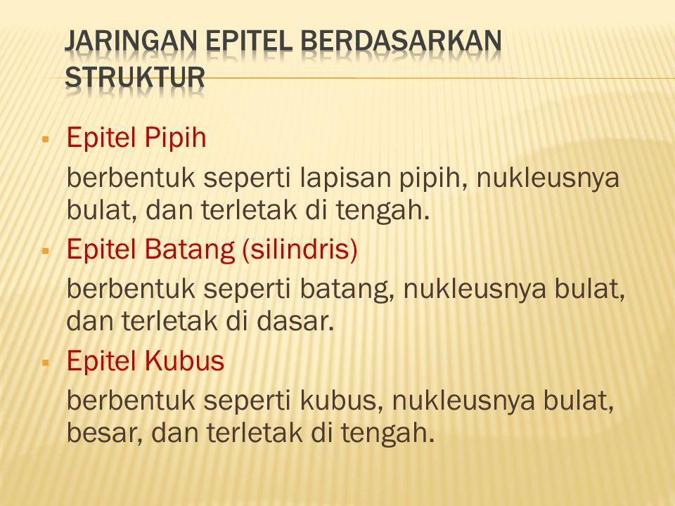 Jenis JaringanPenyusunLetakFungsi Epitel pipih selapisSelapis sel pipihEpitelium pembuluh limfe, pembuluh darah, perikardium, paru-paru,alveoli, selaput perut Dalam proses difusi, osmosis, filtrasi, dan sekresi Epitel pipih berlapis banyak Lebih dari satu sel pipih Epitelium rongga mulut, rongga hidung,esofagus, telapak kaki, vagina Sebagai pelindung Epitel silindris selapis Selapis sel silindris Epiteliumkelenjar pencernaan, jonjot usus, kantungempedu, lambung, usus Penyerapan nutrisi di usus dan sekresi