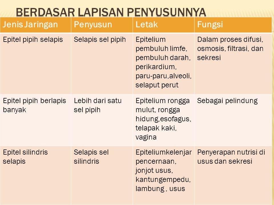 Epitel silindris berlapis banyak Lebih dari satu sel silindris Epitelium laring, faring trakea, kelenjar ludah Dalam sekresi dan sebagai pelindung Epitel kubus selapis Sel selapis kubusEpitelium permukaan ovarium, lensa mata, nefron ginjal Dalam sekresi dan sebagai pelindung Epitel kebus berlapis banyak Lebih dari satu lapis sel kubus Epitelium folikel ovarium, permukaan ovarium, testis, saluran kelenjar minyak, kelenjar keringat Dalam sekresi dan absorpsi, serta melindungi dari gesekan dan pengelupasa Epitel transisiBerlapis-lapis selEpitelium ureter, uretra, saluran pernafasan, kantung kemih Epitel kelenjarDalam sekresi senyawa