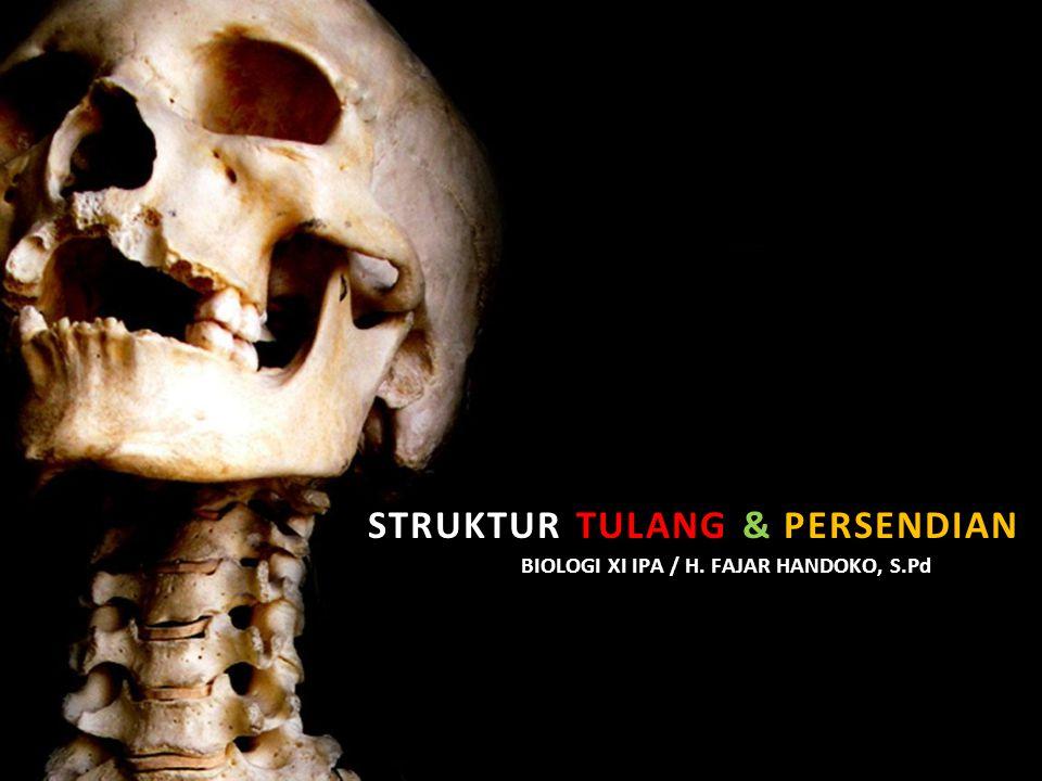 STRUKTUR TULANG & PERSENDIAN BIOLOGI XI IPA / H. FAJAR HANDOKO, S.Pd