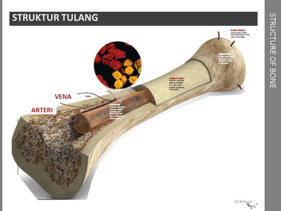 STRUCTURE OF BONE STRUKTUR TULANG ARTERI VENA