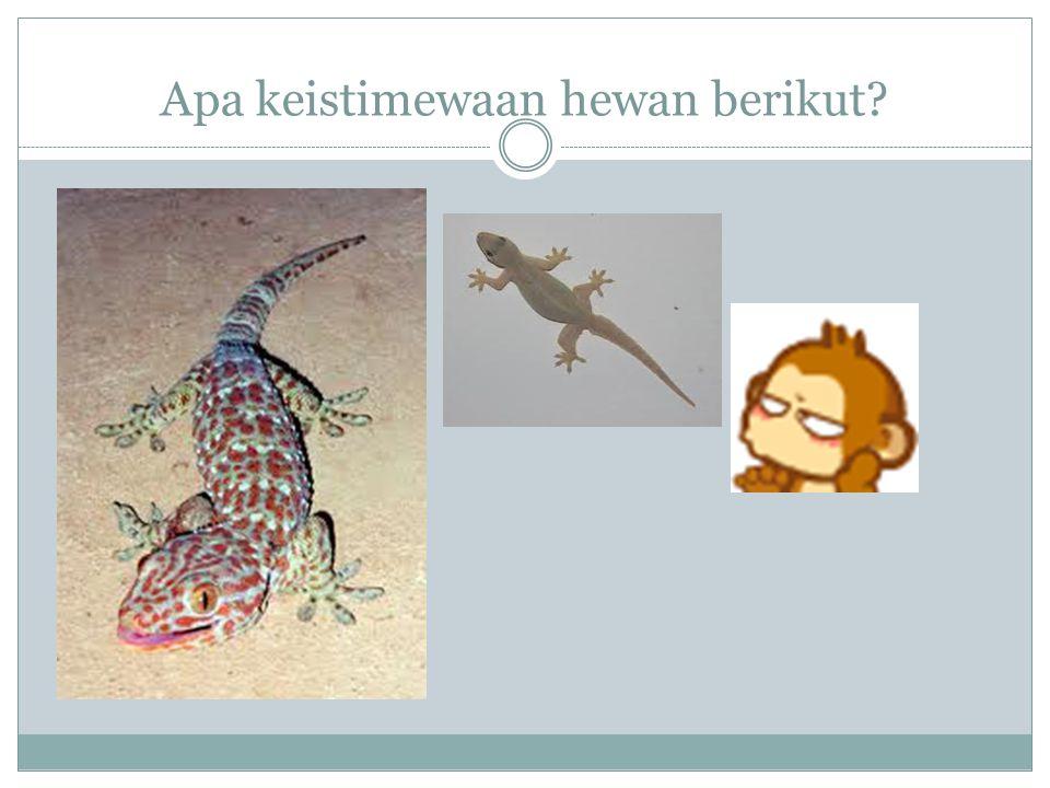 Sebutkan ciri khusus yang dimiliki kelelawar! Selaput tipis di antara tulang lengannya menyerupai sayap : digunakan untuk terbang, Kemampuan mengetahu