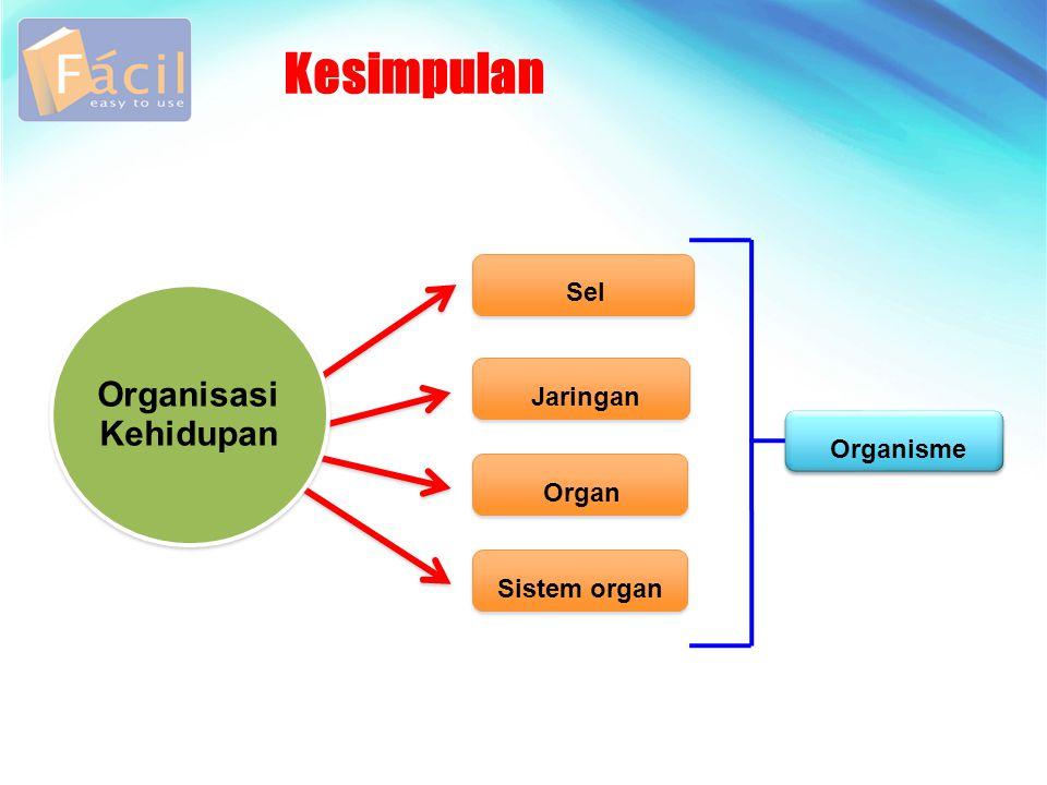Kesimpulan Sel Jaringan Organ Sistem organ Organisasi Kehidupan Organisme