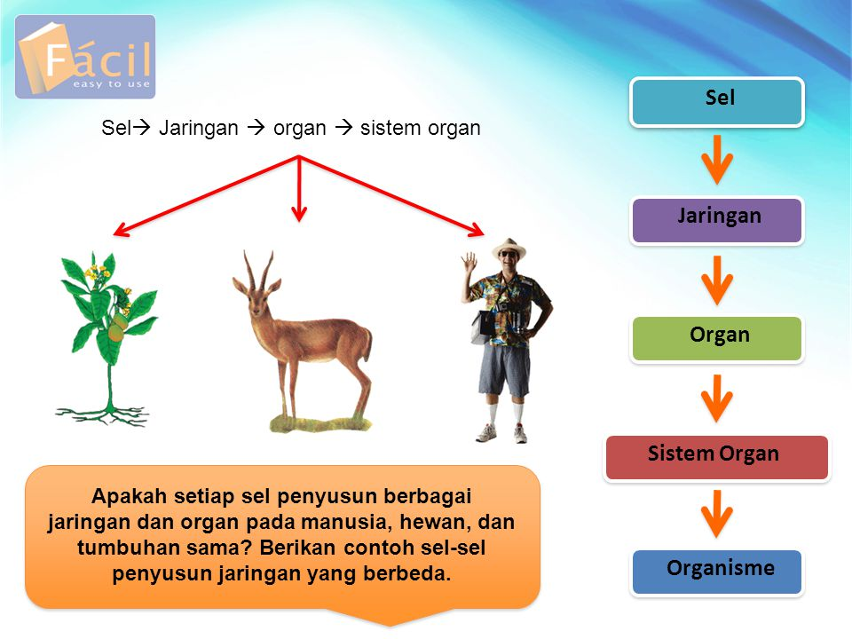 Sel Jaringan Organ Sistem Organ Organisme Apakah setiap sel penyusun berbagai jaringan dan organ pada manusia, hewan, dan tumbuhan sama? Berikan conto