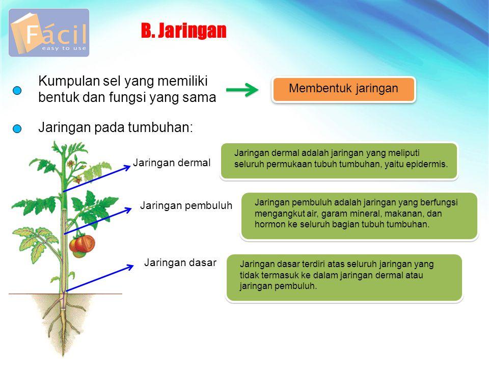 B. Jaringan Kumpulan sel yang memiliki bentuk dan fungsi yang sama Jaringan pada tumbuhan: Membentuk jaringan Jaringan dermal Jaringan pembuluh Jaring