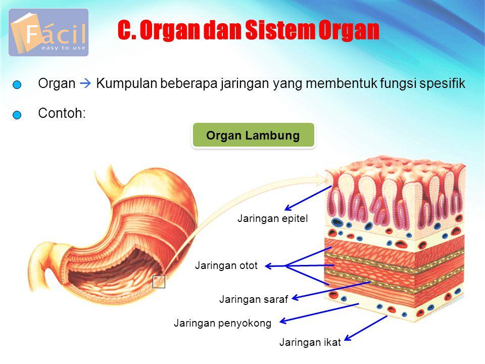 C. Organ dan Sistem Organ Organ  Kumpulan beberapa jaringan yang membentuk fungsi spesifik Contoh: Jaringan epitel Jaringan otot Jaringan saraf Jarin