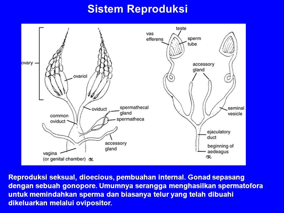 Sistem Reproduksi Reproduksi seksual, dioecious, pembuahan internal. Gonad sepasang dengan sebuah gonopore. Umumnya serangga menghasilkan spermatofora