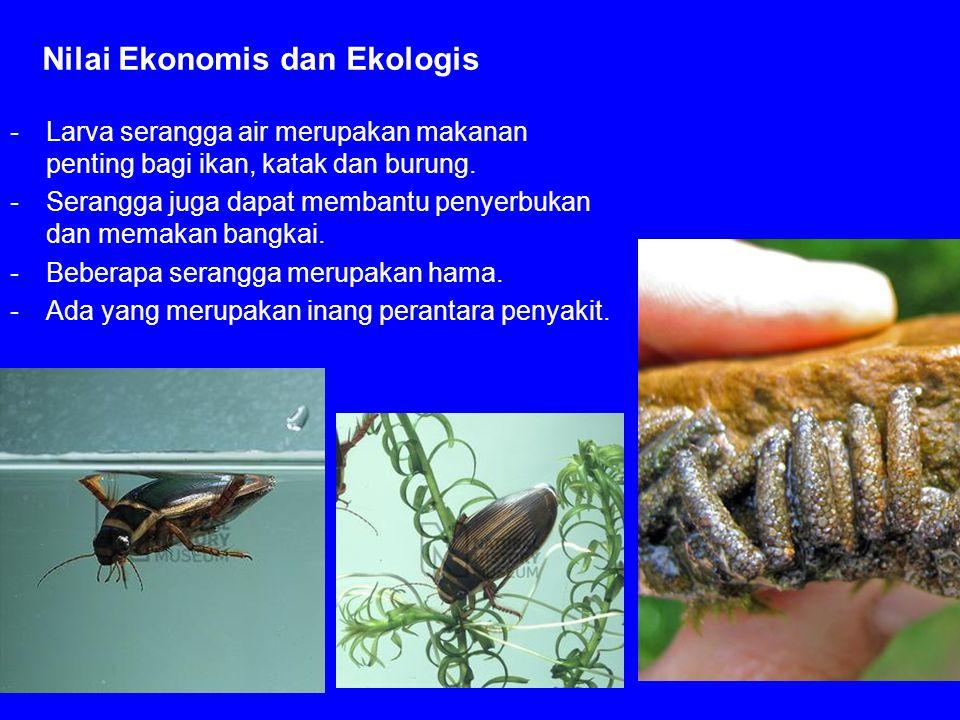 Nilai Ekonomis dan Ekologis -Larva serangga air merupakan makanan penting bagi ikan, katak dan burung. -Serangga juga dapat membantu penyerbukan dan m