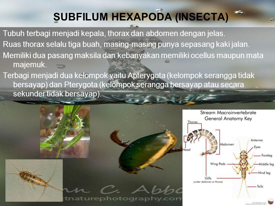 SUBFILUM HEXAPODA (INSECTA) Tubuh terbagi menjadi kepala, thorax dan abdomen dengan jelas. Ruas thorax selalu tiga buah, masing-masing punya sepasang
