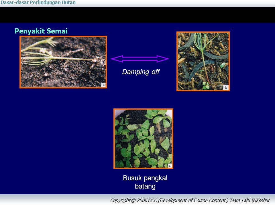Dasar-dasar Perlindungan Hutan Copyright © 2006 DCC (Development of Course Content ) Team LabLINKeshut Penyakit Semai Damping off Busuk pangkal batang