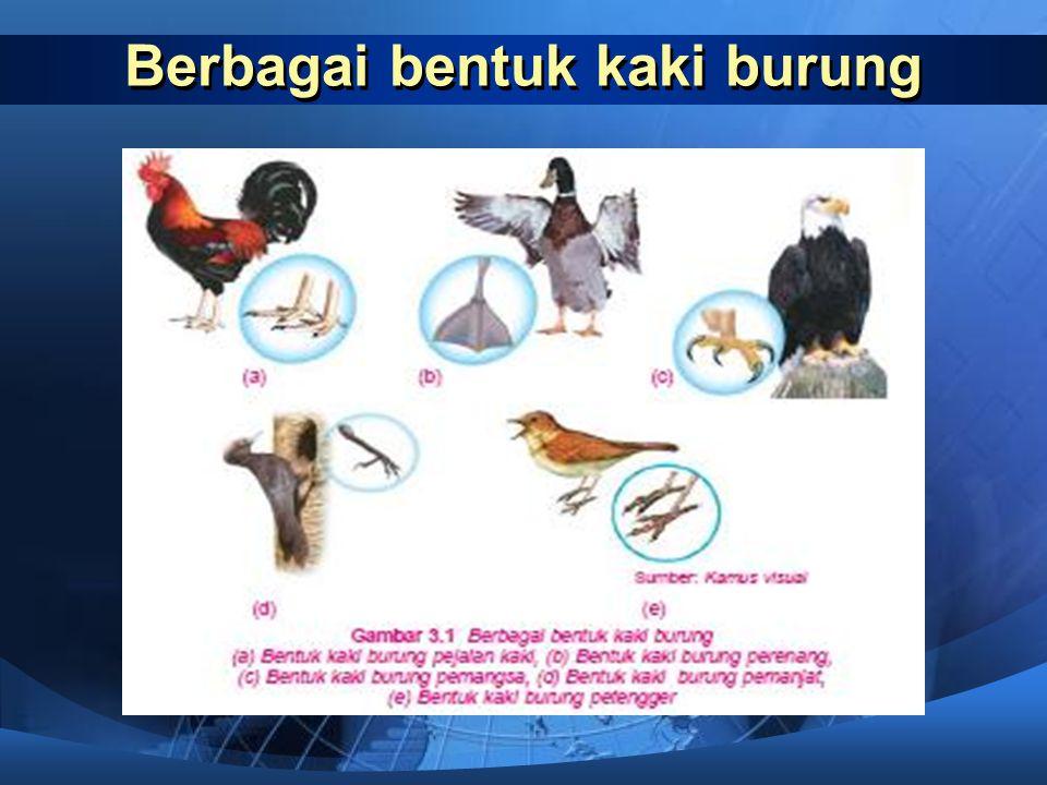 Burung  Burung memiliki bentuk kaki yang berbeda-beda disesuaikan dengan tempat hidupnya dan jenis mangsa yang dimakannya. Berdasarkan lingkungan dan