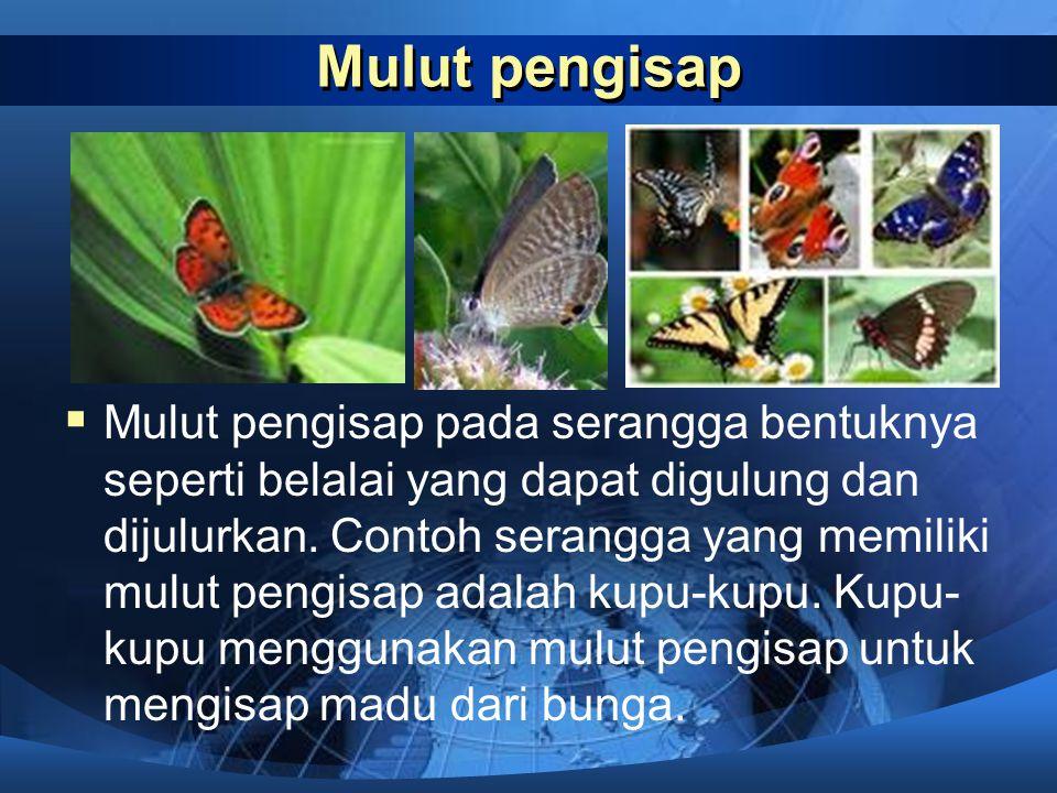 Serangga  Untuk memperoleh makanannya, serangga memiliki cara tersendiri. Salah satu bentuk penyesuaian dirinya adalah bentuk mulut yang bebedabeda s