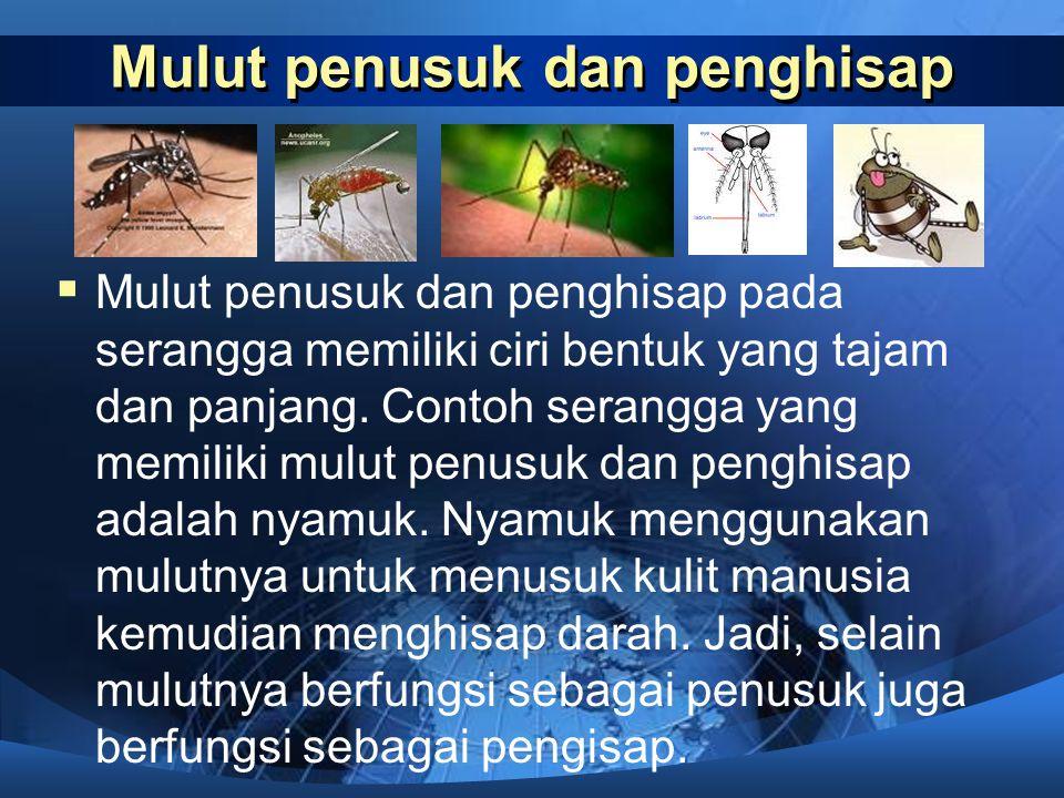 Mulut pengisap  Mulut pengisap pada serangga bentuknya seperti belalai yang dapat digulung dan dijulurkan. Contoh serangga yang memiliki mulut pengis