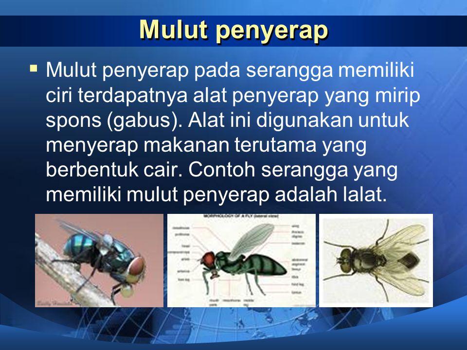 Mulut penjilat MM ulut penjilat pada serangga memiliki ciri terdapatnya lidah yang panjang dan berguna untuk menjilat makanan berupa nektar dari bun