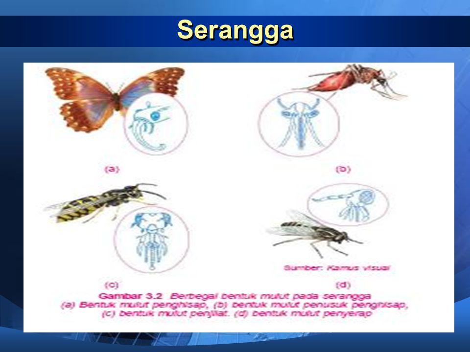 Mulut penyerap  Mulut penyerap pada serangga memiliki ciri terdapatnya alat penyerap yang mirip spons (gabus). Alat ini digunakan untuk menyerap maka