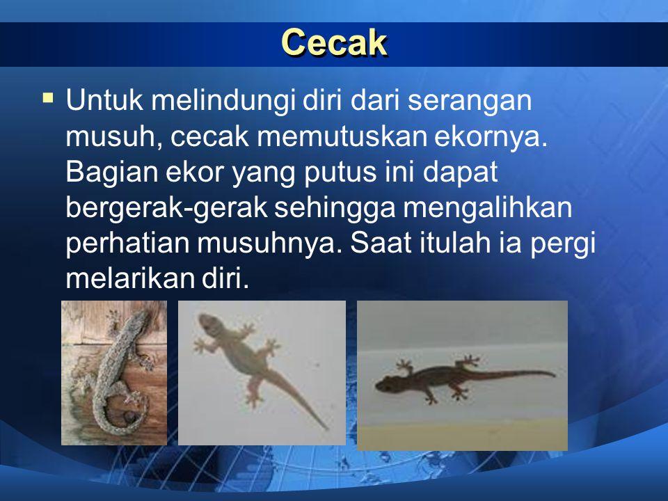 Siput  Siput memiliki pelindung tubuh yang keras dan kuat yang disebut cangkang. Hewan jenis ini melindungi diri dari musuhnya dengan cara memasukkan