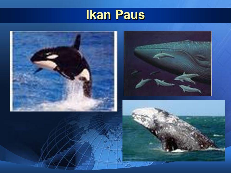 Ikan paus  Paus adalah mamalia yang hidup di air. Seperti hewan mamalia yang lain, walaupun hidup di air paus bernapas menggunakan paru-paru. Padahal