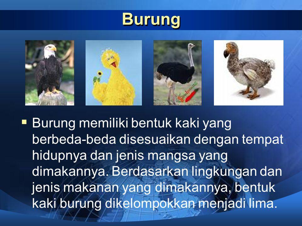 Burung  Burung memiliki bentuk kaki yang berbeda-beda disesuaikan dengan tempat hidupnya dan jenis mangsa yang dimakannya.