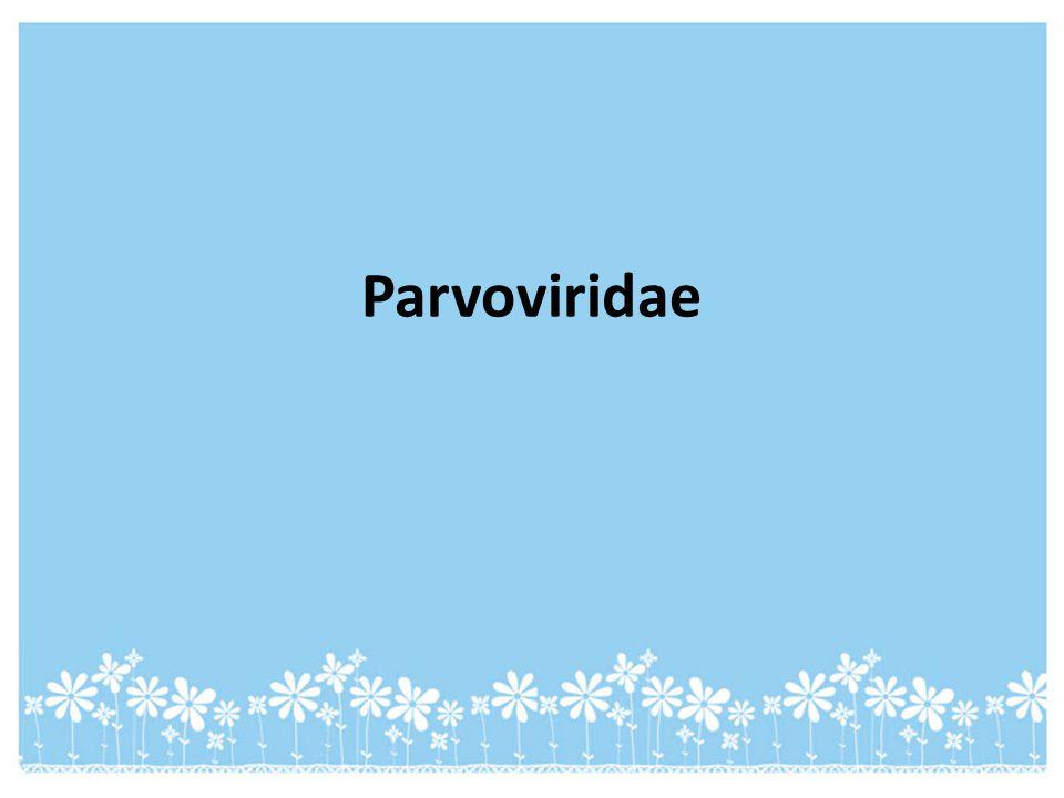 Parvoviridae